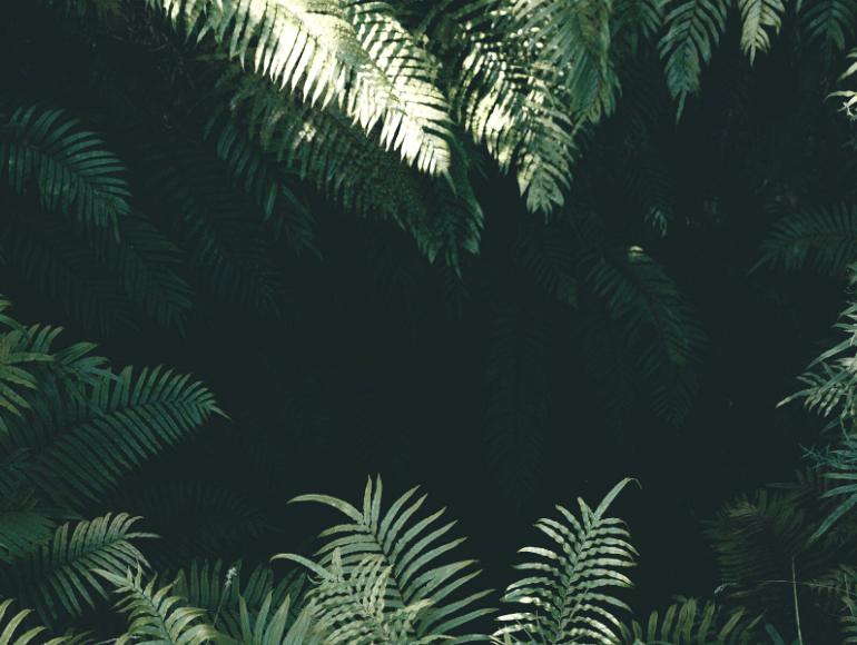 Kommunikationsdschungel